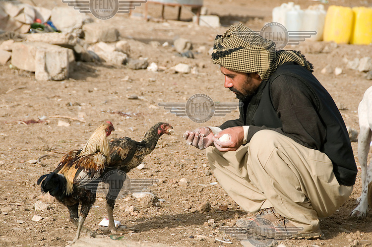 A man feeds his chickens at the Qawala camp for displaced persons, where 136 families from accross the country are housed.
