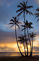Sunrise and coconut palm trees at Punalu'u Beach Park, Windward Oahu, Hawaii.