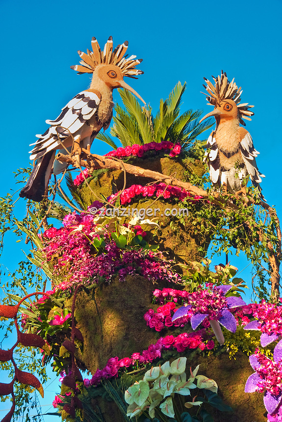 "two, Buff-headed, Hoopoe birds, distinctive, ""crown"" head feathers, Rain Bird, Rose Parade  Float, Mountaintop Majesty native to the high mountains of Rwanda in central Africa"