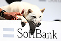 SoftBank introduces new TV commercial