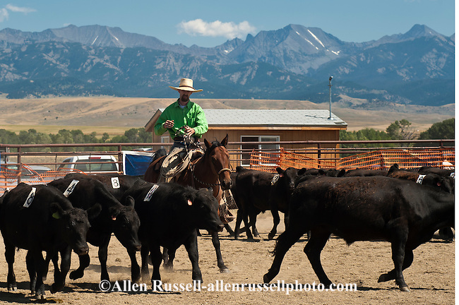 wilsall guys Wilsall is a census-designated place (cdp) in park county, montana, united  states  for every 100 females age 18 and over, there were 946 males.