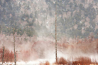 Winter in Kamikochi, with swirling snow rising up behind the ghost forest at Taisho-ike, Nagano, Japan.<br /> <br /> (title translation David Landis Barnhill)
