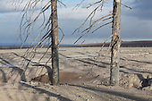 Dead trees in area devastated by pyroclastic flows and lahars from 1964 sector collapse and associated Plinian eruption of Shiveluch Volcano, Kamchatka, Russia.