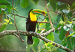 CENTRAL/SOUTH AMERICAN BIRDS