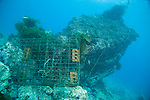 Coronado Islands, Baja California, Mexico; an empty lobster trap sits on the rocky sea floor waiting to collect it's prey , Copyright © Matthew Meier, matthewmeierphoto.com All Rights Reserved