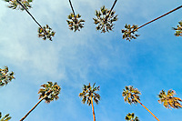 Palm Trees, The Beverly Hills Hotel on Sunset Boulevard, Beverly Hills, CA, California