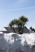 Situated in the Gulf Stream the Island of Islay has an extremely mild climate allowing palm trees to grow