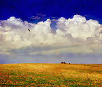 A bird flying above a yellow field with large white clouds against a blue sky