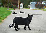 A group of cats played outside their home on River rd. on Oct. 12th. The family that keeps them has 8 more felines, saying that they are necessary for exterminating all the mice that populate the area. .Photo by Sam Verbulecz