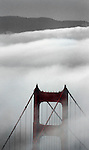 Golden Gate Bridge in fog through the pines of the foothills of Sausalito California...