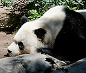 A Day at the Zoo - 9/10/11