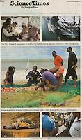 Mobula ray trade image in Sri Lankan fish market in New York Times.