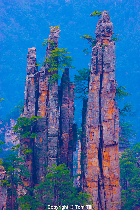 Royal Pen Peak.Rock pinnacles in Emperor Mountain Reserve.People's Republic of China.Wulingyuan National Park UNESCO WHS.Rock formations of  quartz-sandstone