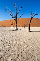 Deadvlei, Dead Acacia trees in an old clay pan, Namib-Naukluft National Park, Namibia