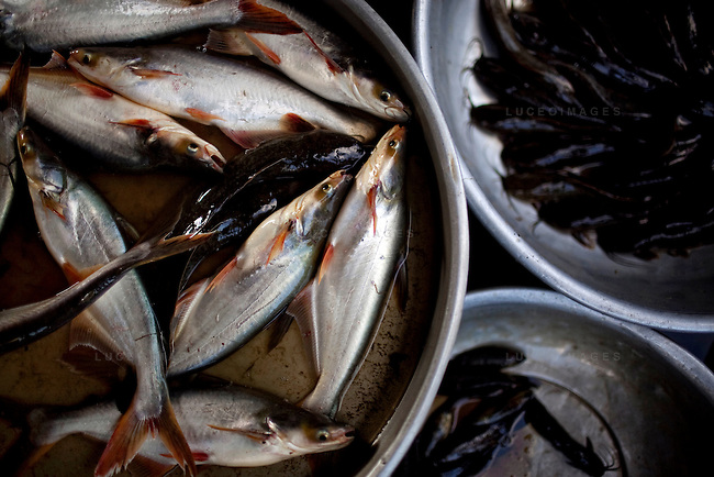 Local fish at the market on Con Son Island, part of the Con Dao Islands.The 16 mountainous islands and islets are situated about 143 miles southeast of Ho Chi Minh City in Vietnam, in the South China. Photo taken Thursday, May 6, 2010...Kevin German / LUCEO For the New York Times