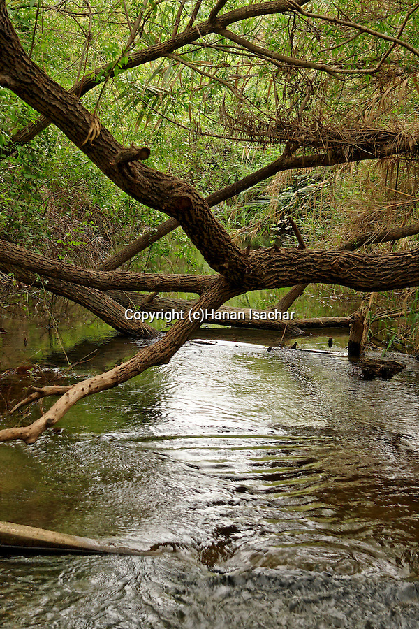 Israel, Daliyot stream in the Majraseh nature reserve