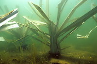 Fish Hiding Structures<br />