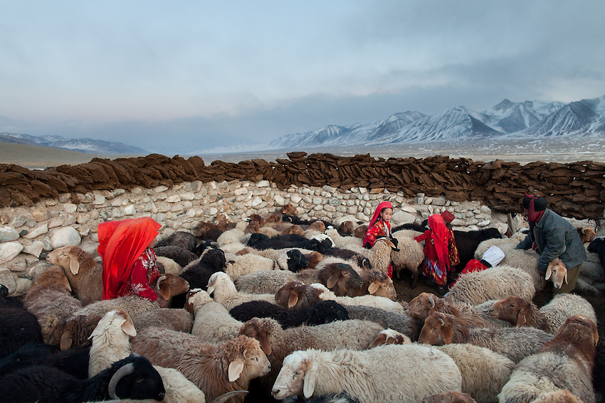 In this high, barren plateau, survival depends on livestock. Red-robed Kyrgyz girls corral sheep for milking, while dung dries atop the walls for use as fuel. The sheep, along with goats, yak and camels provide milk, meat and wool. At the Andemin camp...Trekking through the high altitude plateau of the Little Pamir mountains, where the Afghan Kyrgyz community live all year, on the borders of China, Tajikistan and Pakistan.
