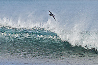 Antarctic Prion in the Surf