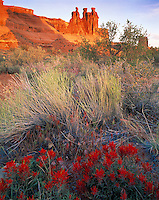 Indian Paintbrush & Three Gossips, Arches National Park, Utah   Castilleja chromosa