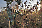 Hellesa Gune cuts grass to use on the thatched roof of her hut in Yei, Southern Sudan. Ms. Nyoka is a United Methodist. NOTE: In July 2011, Southern Sudan became the independent country of South Sudan