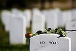 ARLINGTON, VA - NOVEMBER 11: A single rose lays on the headstone of a fallen serviceman on Veteran's Day at Arlington National Cemetery on November 11, 2012 in Arlington, Virginia.