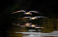 Aquidauana_MS, Brasil...Aves voando proximo a um lago da fazenda Rio Negro no Pantanal...Birds flying next to a lake in the Rio Negro farm in Pantanal...Foto: JOAO MARCOS ROSA / NITRO