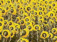 Flower, Botanical, Floral, and Plant Photographs