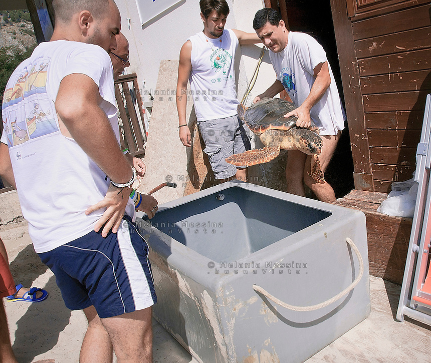 Palermo, volontari del WWF  si accingono a liberare a mare una tartaruga caretta caretta, dopo averla curata.<br />