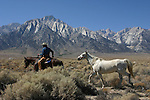 Cowboy and horses near Mt. Whitney