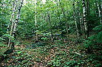 TREES - PLANTS<br /> Deciduous Forest<br /> Acadia National Park