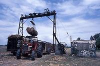 Overhead crane loading sugarcane into wagons, Barahona, Dominican Republic