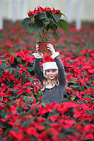 NO REPRO FEE.11.11.2011. SUPERVALU SIGNS NEW DEAL WITH UNIPLUMO TO SUPPLY IRISH POINSETTIAS FOR CHRISTMAS - SuperValu, Ireland's leading independent supermarket, has announced that it has signed a new agreement worth over EUR335,000 with Dublin based company Uniplumo to supply Poinsettias for the Christmas season. As a result, SuperValu will only stock 100% Irish Poinsettias this Christmas, which will retail at just EUR3. Pictured amongst the flowers at the Uniplumo farm in Swords Co. Dublin are Nessa Last (aged 5), Anna-Rose Pitt (aged 2). Picture James Horan/Collins