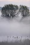Foto: VidiPhoto<br /> <br /> DRIEL - Ochtengloren. De combinatie van nachtvorst en nevel zorgde maandagmorgen tegen zonsopkomst voor prachtige sfeerbeelden en 'Afrikaanse' kleurencombinaties in de uiterwaarden bij Driel (Gelderland). Ook de nacht van dinsdag op woensdag gaat het vriezen op klomphoogte, zo is de verwachting. De temperatuur ligt deze week meest rond de 13 graden, maar dat daalt fors aan het einde van de week. Vanaf zaterdag neemt ook de kans op regen flink toe.