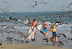 seabirds and visitors in Aptos
