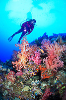 A female scuba diver, Suelaine Gin observing the colorful soft corals found in the Witu Islands off New Britain Island, Papua New Guinea. Model Released.