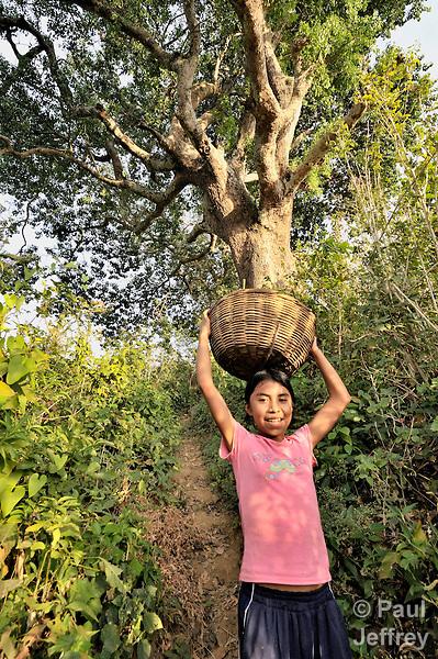 On her family's hillside farm outside Santa Catarina Masahuat, El Salvador, Roxana Ascencio Reyes carries home part of the sorghum harvest.