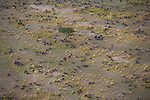 Aerial of wildebeests, Kenya