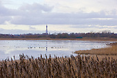 Blackpool Tower viewed from Marton Mere in winter. A particularly cold winter in January 2010, saw the Mere completly freeze over. Marton Mere is part of the original Body of Water that Blackpool takes it's name from. Black due to the Tannins, natural carried in the water.