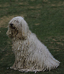 Komondor<br /> <br /> <br /> Shopping cart has 3 Tabs:<br /> <br /> 1) Rights-Managed downloads for Commercial Use<br /> <br /> 2) Print sizes from wallet to 20x30<br /> <br /> 3) Merchandise items like T-shirts and refrigerator magnets