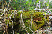 Decaying sled bridge covered in moss along an old sled road in the Cedar Brook Valley of the Pemigewasset Wilderness in New Hampshire. This was part of the East Branch & Lincoln Railroad, which operated from 1893-1948.