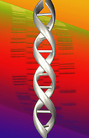 Conceptual illustration of a DNA double helix superimposed over a DNA sequencing gel