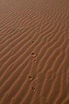Tracks leading up a sand dune in Namibia.