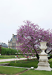 Tuileries Gardens (Jardin des Tuileries) and the Louvre Museum in spring, Paris, France, Europe