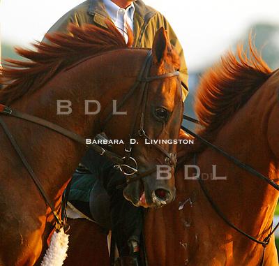Funny Cide at Belmont.  © 6/03 Barbara D. Livingston.