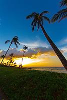 At sunset, the wind blows over coconut palm trees and naupaka at a black sand beach between Mauna Lani and Fairmont Orchid Resorts, Big Island.