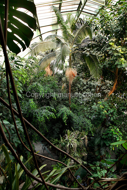 Tropical Rainforest Glasshouse (formerly Le Jardin d'Hiver or Winter Gardens), 1936, René Berger, Jardin des Plantes, Museum National d'Histoire Naturelle, Paris, France. Panoramic view from the third floor of the cave of the luxuriant tropical foliage with a Howea Forsteriana palm tree in the middle, beneath the glass and metal roof structure of the Art Deco style glasshouse.
