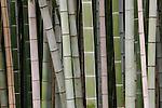 Bamboo, Kyoto, Japan