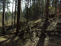 FOREST_LOCATION_90203