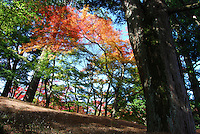 Colorful forest scenery of Japanese outdoor photography during fall season. Nature stock images by Paul Chong.